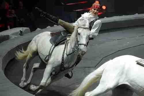 חיות סוסים